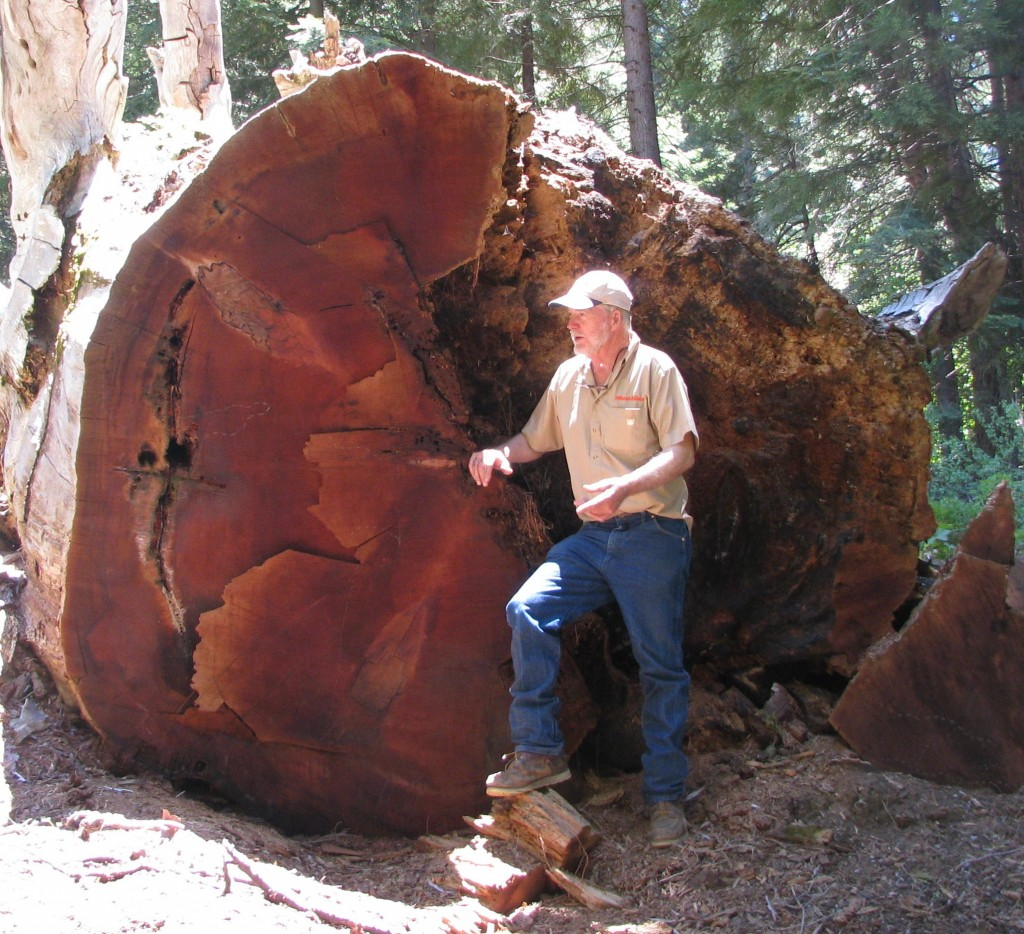 Man standing in front of large downed tree