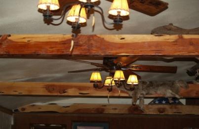 juniper ceiling