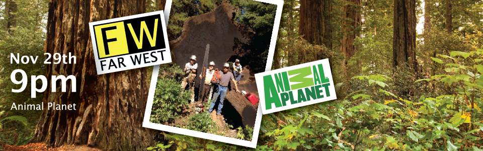 Watch Far West Log for Daniel's WoodLand - The redwood Kings, on Animal Planet