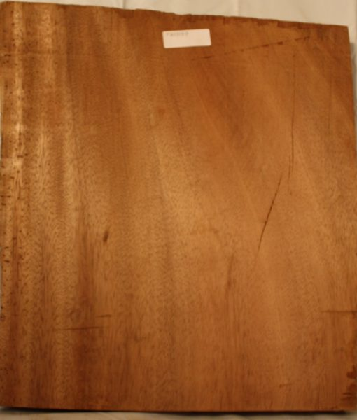 Palm Wood, FW13129