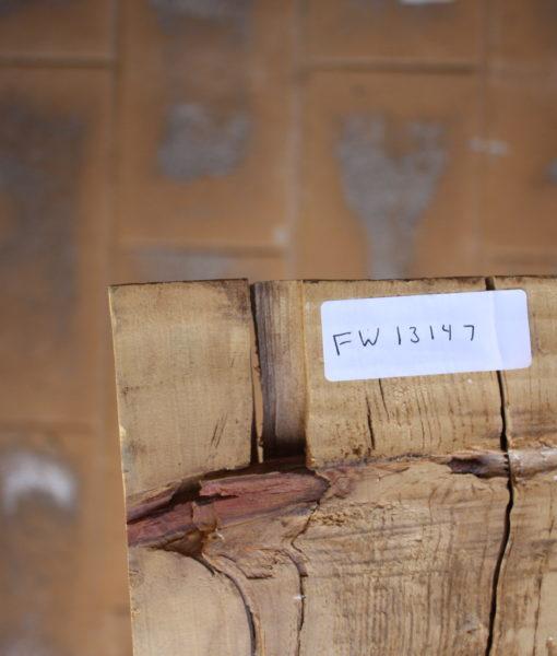 Norfolk Pine Live Edge, FW13147
