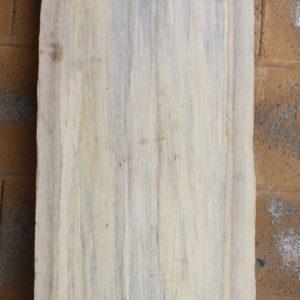 Norfolk Pine, FW1351