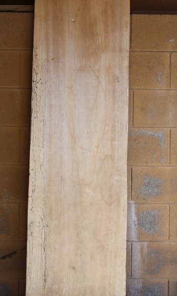 Palm Wood Spalted Wormy, FW13153