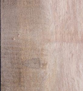 Sycamore Lumber Board, FW13205