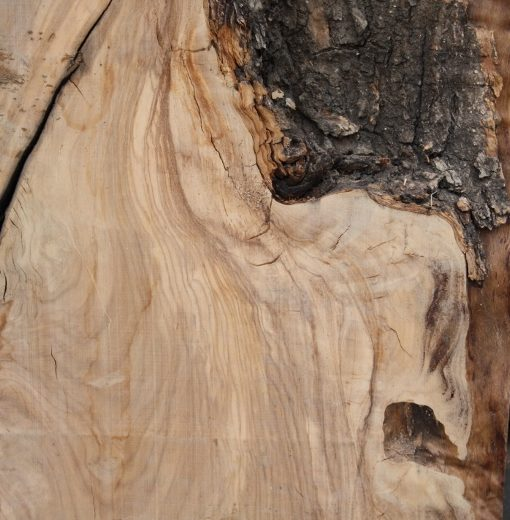 Olive Wood Lumber, XA09