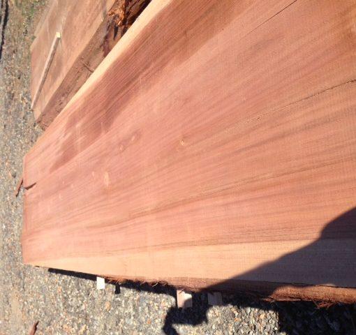 Coastal Redwood Slab, FW1735