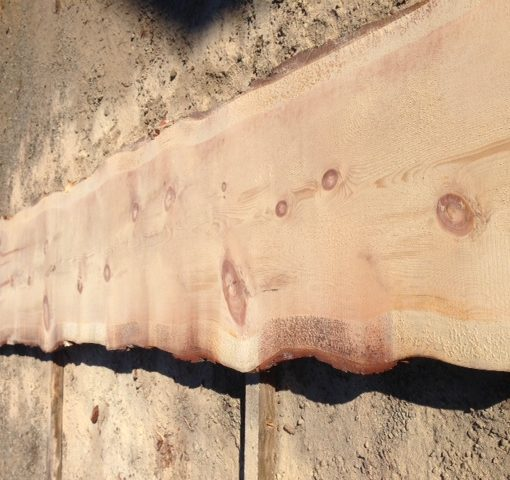 Sugar Pine Natural Edge Slab, FW1733