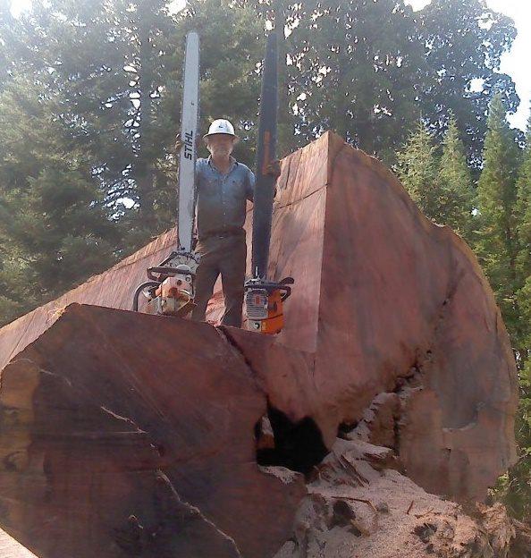 jim evans on the Giant Sequoia Redwood he split