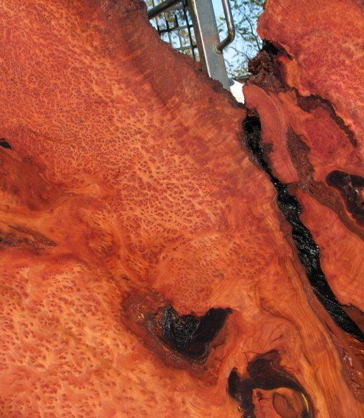 Redwood Burl Slab, Curly, FW1104