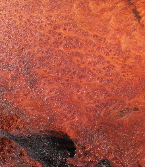 Redwood Burl Slab, Curly, FW1105