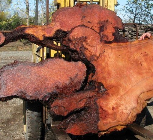 Redwood Burl Slab, Curly, FW1106