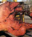 Redwood Burl Slab, Curly, FW1107