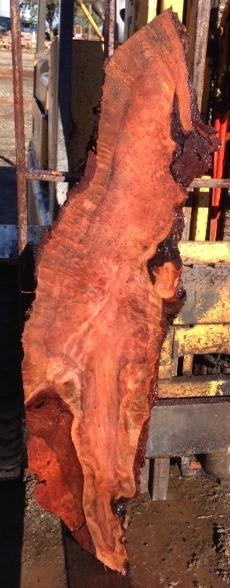 Redwood Burl Slab, Curly, FW1109