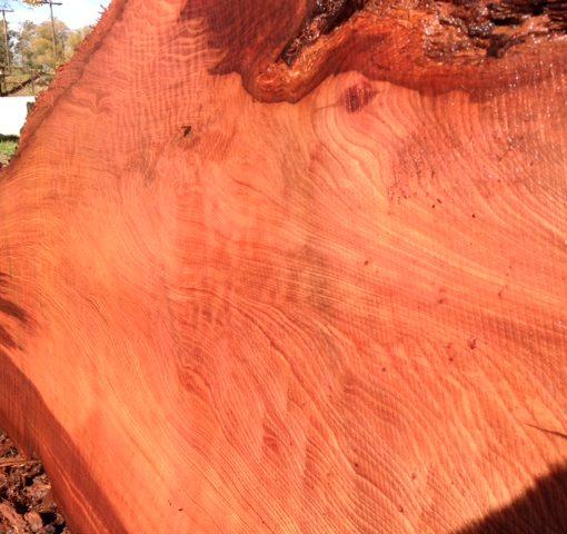 Redwood slab, Curly, FW1144