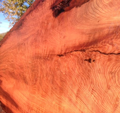 Redwood Slab, Curly, FW1145
