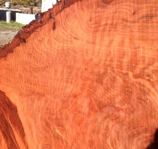 Redwood Slab, Curly, FW1146