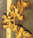 Olive Wood Slab, KC1497
