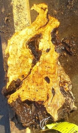 Olive Wood Slab, KC1226