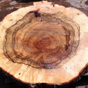 Blue Oak Burl Round, PE1041