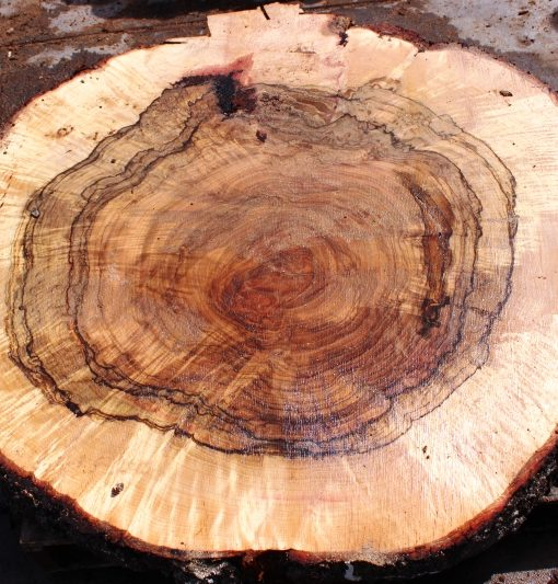 Blue Oak Burl Round, PE1041