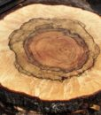 Blue Oak Burl Round, PE1510