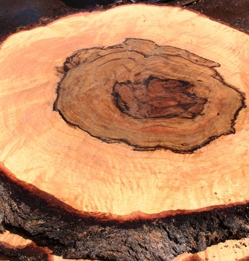 Blue Oak Burl Round, PE1513