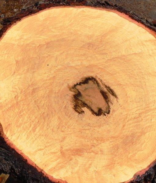 Blue Oak Burl Round, PE1514