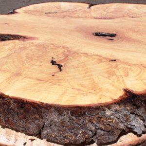 Blue Oak Burl Round, PE1519