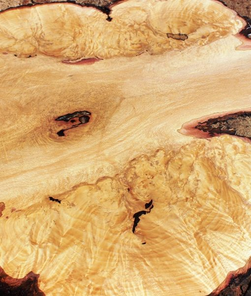 Blue Oak Burl Round, PE1520