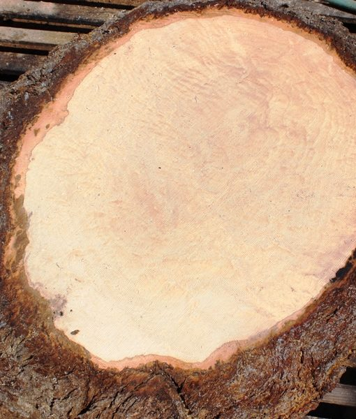 Blue Oak Burl Round, PE1521