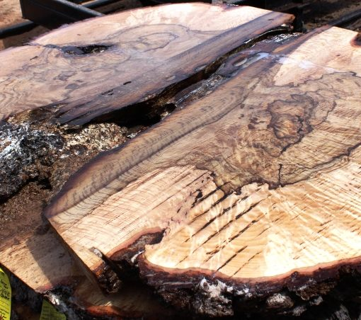 Blue Oak Burl, PE1518
