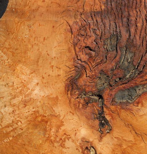 Madrone Burl Round Slab, FW1446
