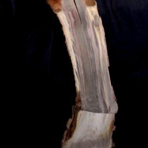 Pistachio Blank, kc051465