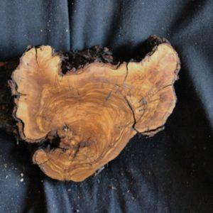 Olive Wood Blank, KC072719