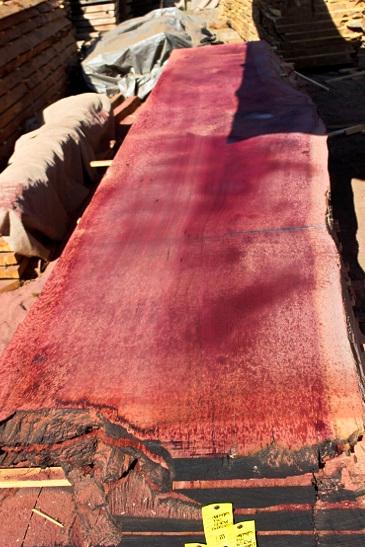 Giant Sequoia Windfallen Redwood, FW082415-05