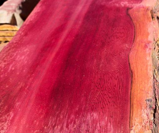 Giant Sequoia Windfallen Redwood, FW082415-07