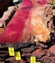 Giant Sequoia Windfallen Redwood, FW082415-08