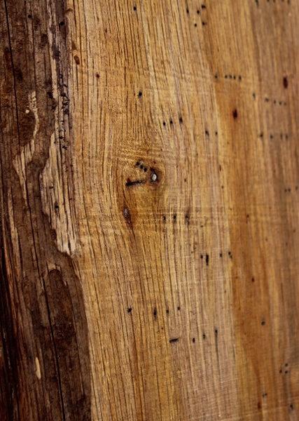 Spalted Tan Oak Set of Three, JKSET1