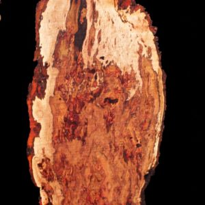 Pecan Blank with Burl Cluster, DC093015-1