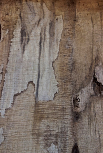 Myrtle Wood Slab, FW5840