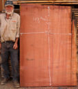 Giant Sequoia Windfallen Redwood Slab, FW101515-3