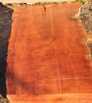 Sycamore Wood Slab, DP915-03