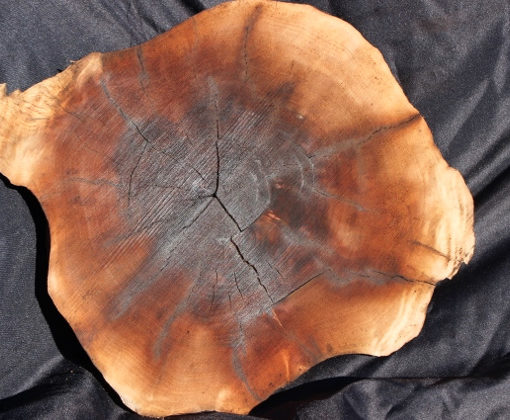 Walnut Burl Round, GM121515-1