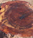 California Walnut Burl, GM121515-9
