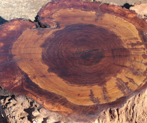 California Claro Walnut Slab, GM121515-10