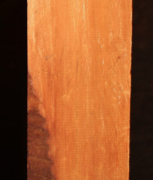 giant sequoia redwood fw10734-6
