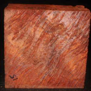 giant sequoia red-wood fw111014-020