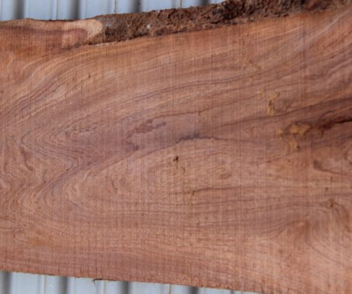 acacia close up fw011617-16