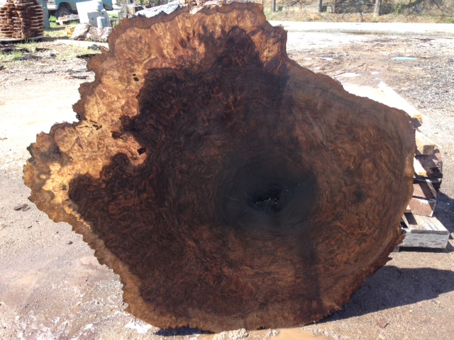 Claro Walnut Burl round with some sap wood around edges