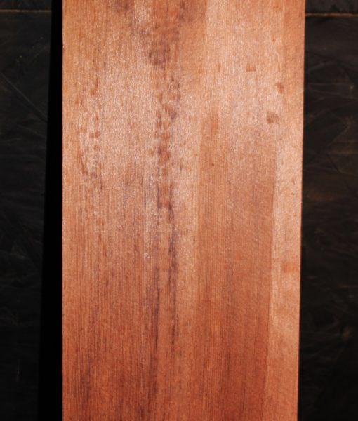 giant sequioa redwood